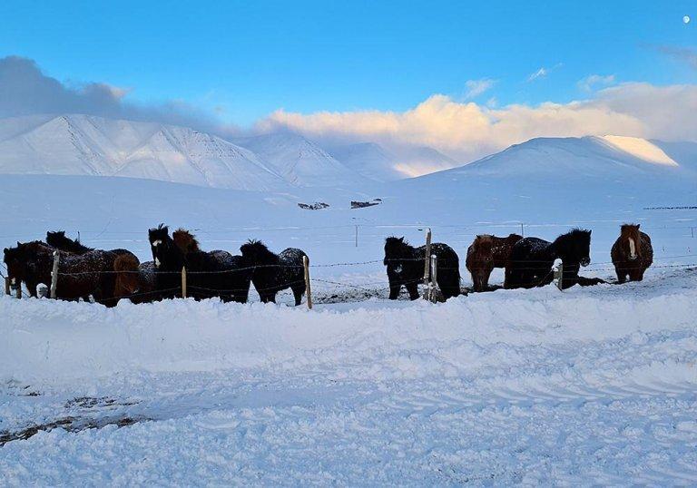 Veðrið var orðið skaplegt í Hjaltadalnum nú um miðjan dag. Myndirnar í myndasyrpunni eru frá því í g…